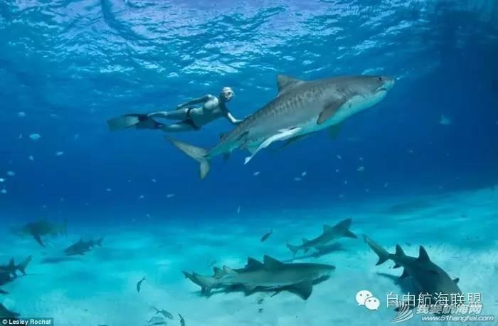 加勒比海,巴哈马,帆船 寻找黑珍珠号——加勒比海巴哈马帆船旅行(FreeSailing 4月开拓团)[巴哈马] 2d11ebffee998f46208f38c32f8dede5.jpg