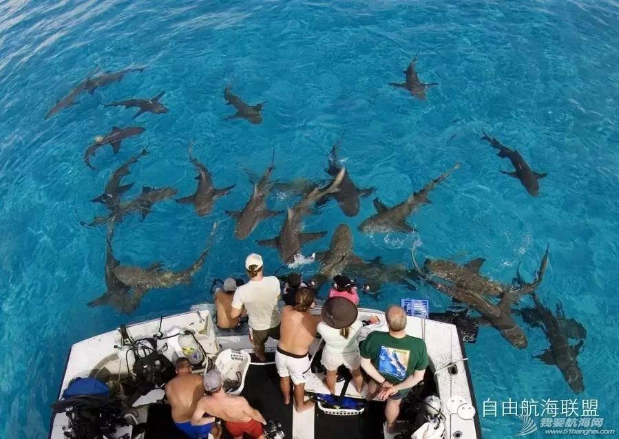 加勒比海,巴哈马,帆船 寻找黑珍珠号——加勒比海巴哈马帆船旅行(FreeSailing 4月开拓团)[巴哈马] d8280dba78195595f3f789550cbd983d.jpg