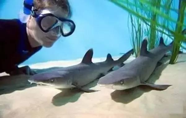 拯救鲨鱼从我做起!没有买卖,就没有杀害!蓝途邀你一起行动! f128b5dd799b14b3f3978e1f22d5aae7.jpg