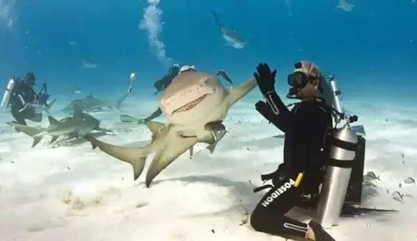 拯救鲨鱼从我做起!没有买卖,就没有杀害!蓝途邀你一起行动! 99084a950055cc50ba190c4d3e37a237.jpg