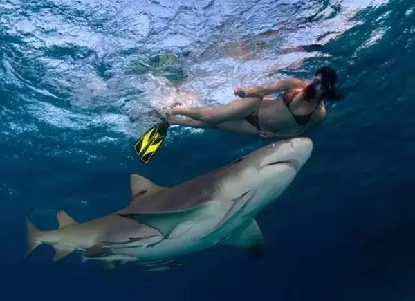 拯救鲨鱼从我做起!没有买卖,就没有杀害!蓝途邀你一起行动! 3ea37a5353c4685f46340198a8b7b4d1.jpg