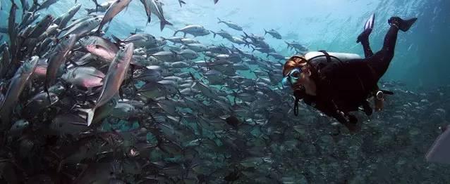 公益 | 再不加以重视,30年后我们或无鱼可吃 6ee25837903d2b027801d4c5b84378ab.jpg