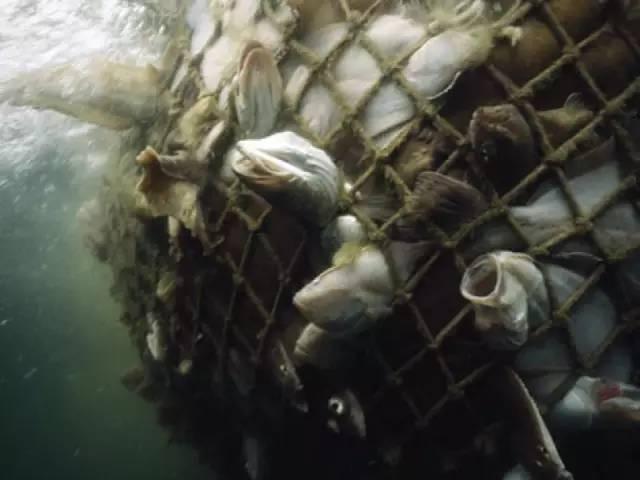 公益 | 再不加以重视,30年后我们或无鱼可吃 7947707646ad3164bb50600b7d4ce937.jpg