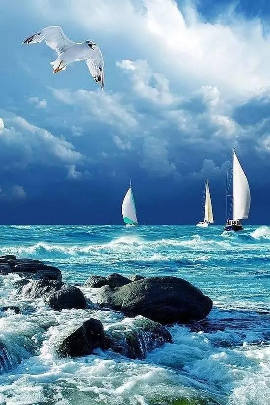帆船航海夏令营- 起航吧少年,向着梦想出发! 911f086c6e6ec14244bf69ec455d481a.jpg