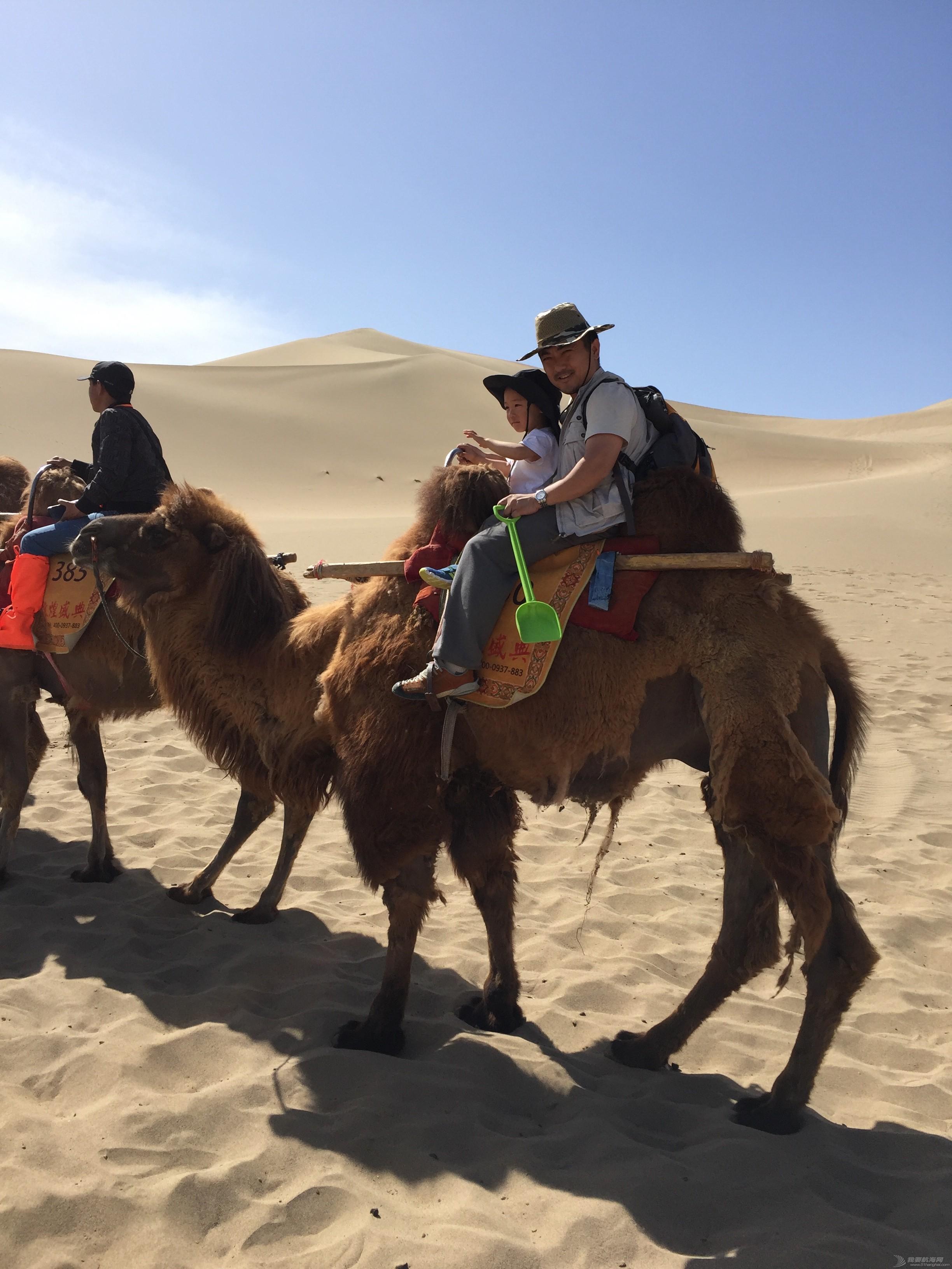 2016-CCOR纪实:生活不止眼前的苟且,还有诗和远方的大海 大骆驼