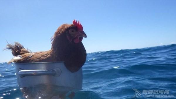 帆船 母鸡都玩帆船啦,你还等啥呀?! 2.jpg