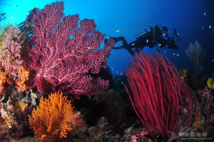 印尼,潜水,圣地,礼物,装备 印尼7大最佳潜水圣地 3.jpg