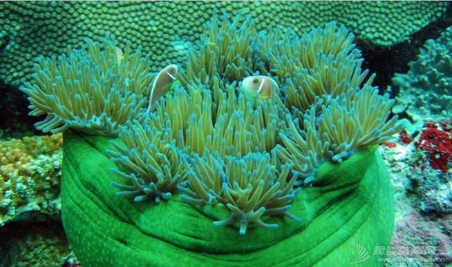 印尼,潜水,圣地,礼物,装备 印尼7大最佳潜水圣地 1.jpg