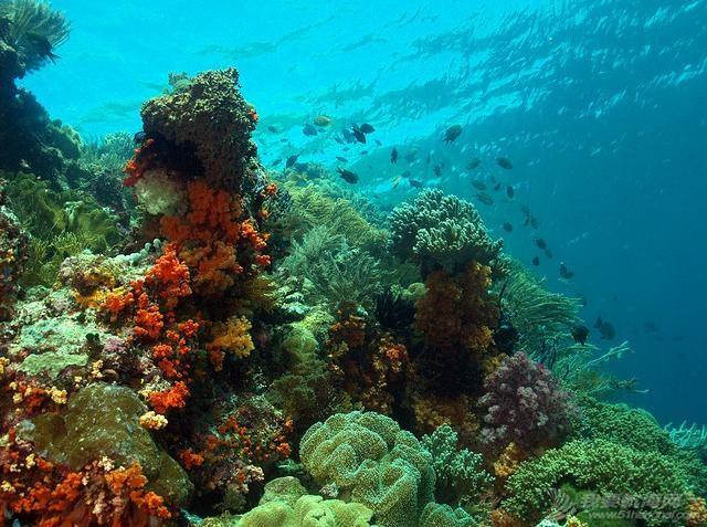 印尼,潜水,圣地,礼物,装备 印尼7大最佳潜水圣地 10.jpg