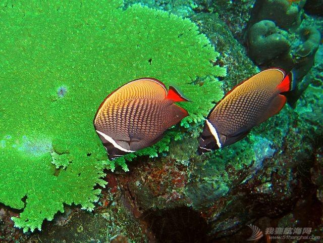 印尼,潜水,圣地,礼物,装备 印尼7大最佳潜水圣地 11.jpg