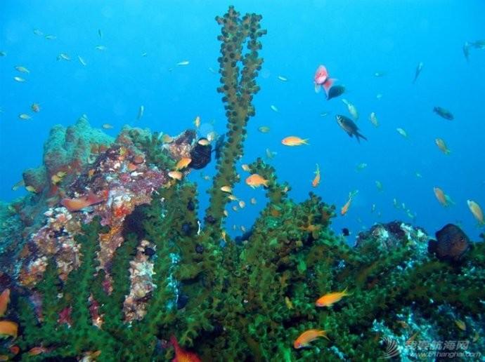 印尼,潜水,圣地,礼物,装备 印尼7大最佳潜水圣地 12.jpg