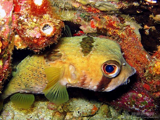 印尼,潜水,圣地,礼物,装备 印尼7大最佳潜水圣地 13.jpg
