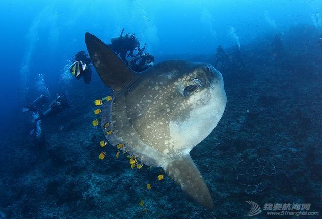 印尼,潜水,圣地,礼物,装备 印尼7大最佳潜水圣地 18.jpg