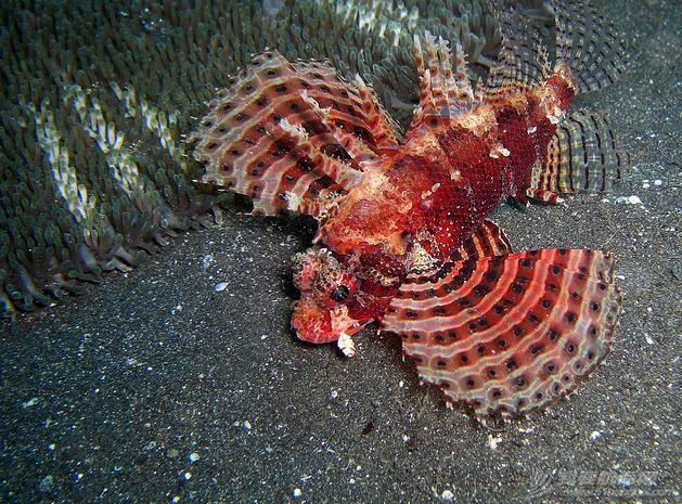 印尼,潜水,圣地,礼物,装备 印尼7大最佳潜水圣地 19.jpg