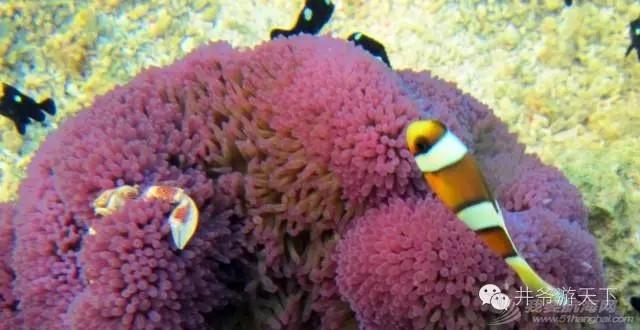 西沙群岛,中国梦,潜水员 潜水员的中国梦——西沙群岛,潜水全攻略 20160620_100623_008.jpg