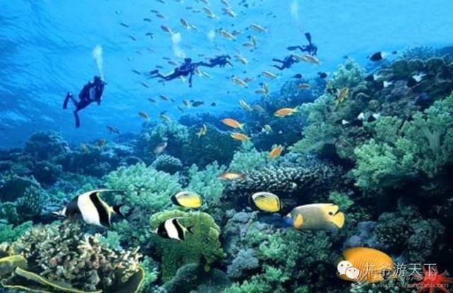 西沙群岛,中国梦,潜水员 潜水员的中国梦——西沙群岛,潜水全攻略 20160620_100623_013.jpg