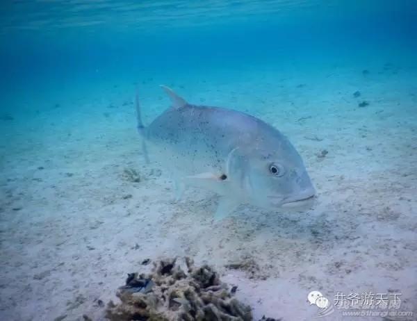西沙群岛,中国梦,潜水员 潜水员的中国梦——西沙群岛,潜水全攻略 20160620_100623_015.jpg
