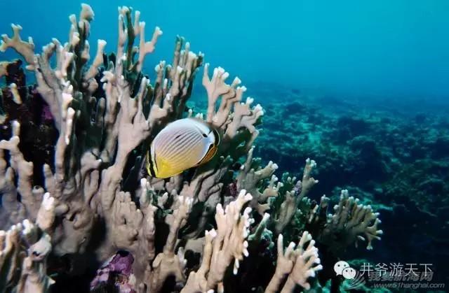 西沙群岛,中国梦,潜水员 潜水员的中国梦——西沙群岛,潜水全攻略 20160620_100623_019.jpg