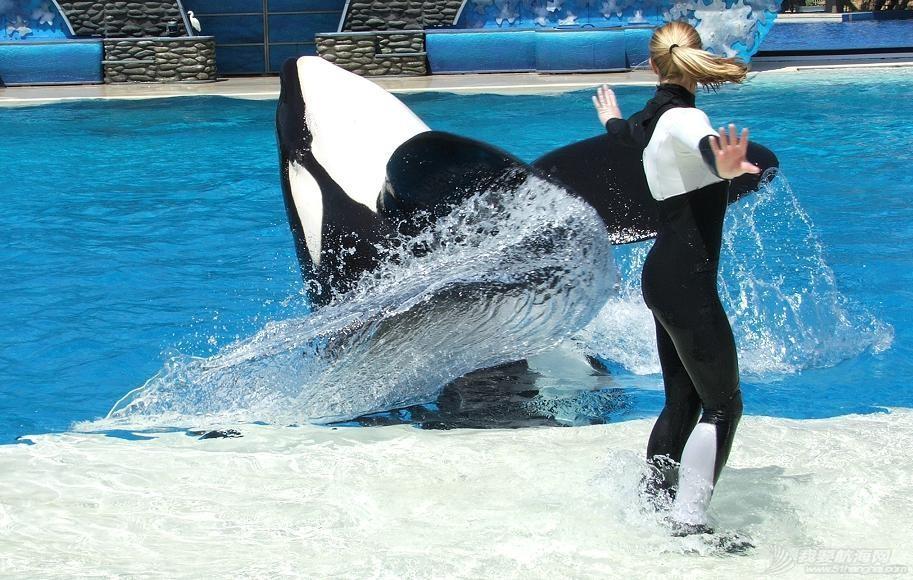 """小孩子,天堂,挪威 Keiko你在天堂还好么?以人类方式""""爱""""的启迪 orca_ballet_by_supremestar.jpg"""