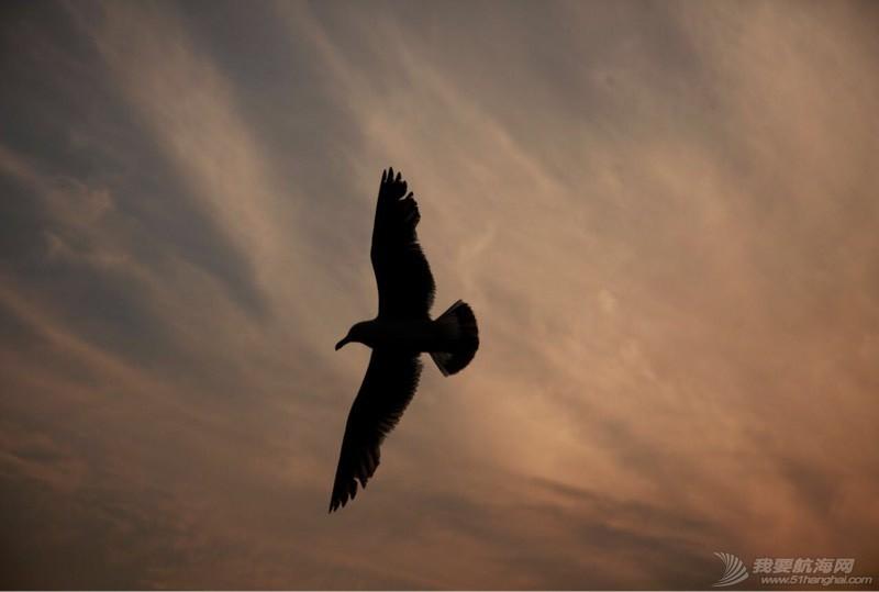海鸥翱翔 225143dnnntii2oy1ywuzw.jpg
