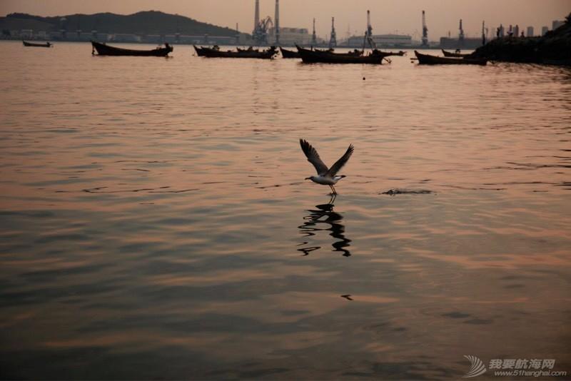 海鸥翱翔 225143j48cwzrxyyg4gxzh.jpg