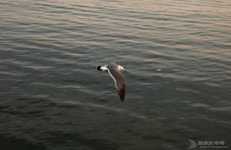 海鸥翱翔 225144gn8gzgiaxmxgaffu.jpg