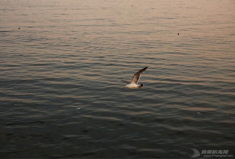 海鸥翱翔 225144uqng29hlyj9olblj.jpg