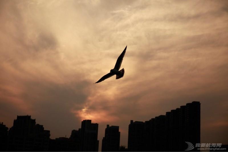 海鸥翱翔 225144vqznz90kkkdz1klz.jpg