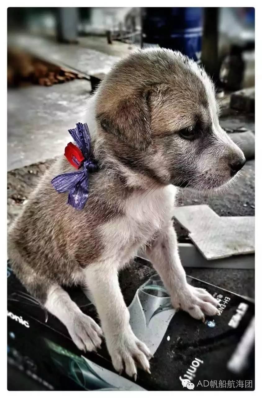 与航海无关—一只水手狗的羁绊 87c8e925d256d4c9252e20e46b7fc36d.jpg