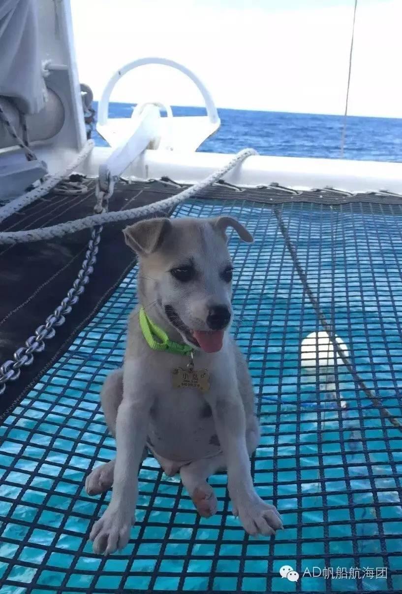 与航海无关—一只水手狗的羁绊 f35b99ca15541dc3d41b801aef90dee6.jpg