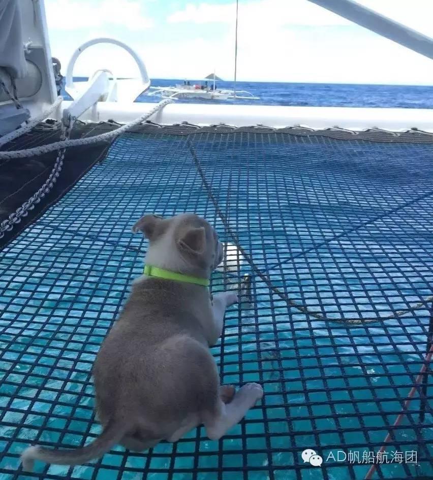 与航海无关—一只水手狗的羁绊 7f752052cd49c2c6f0ec296c767c1ab8.jpg
