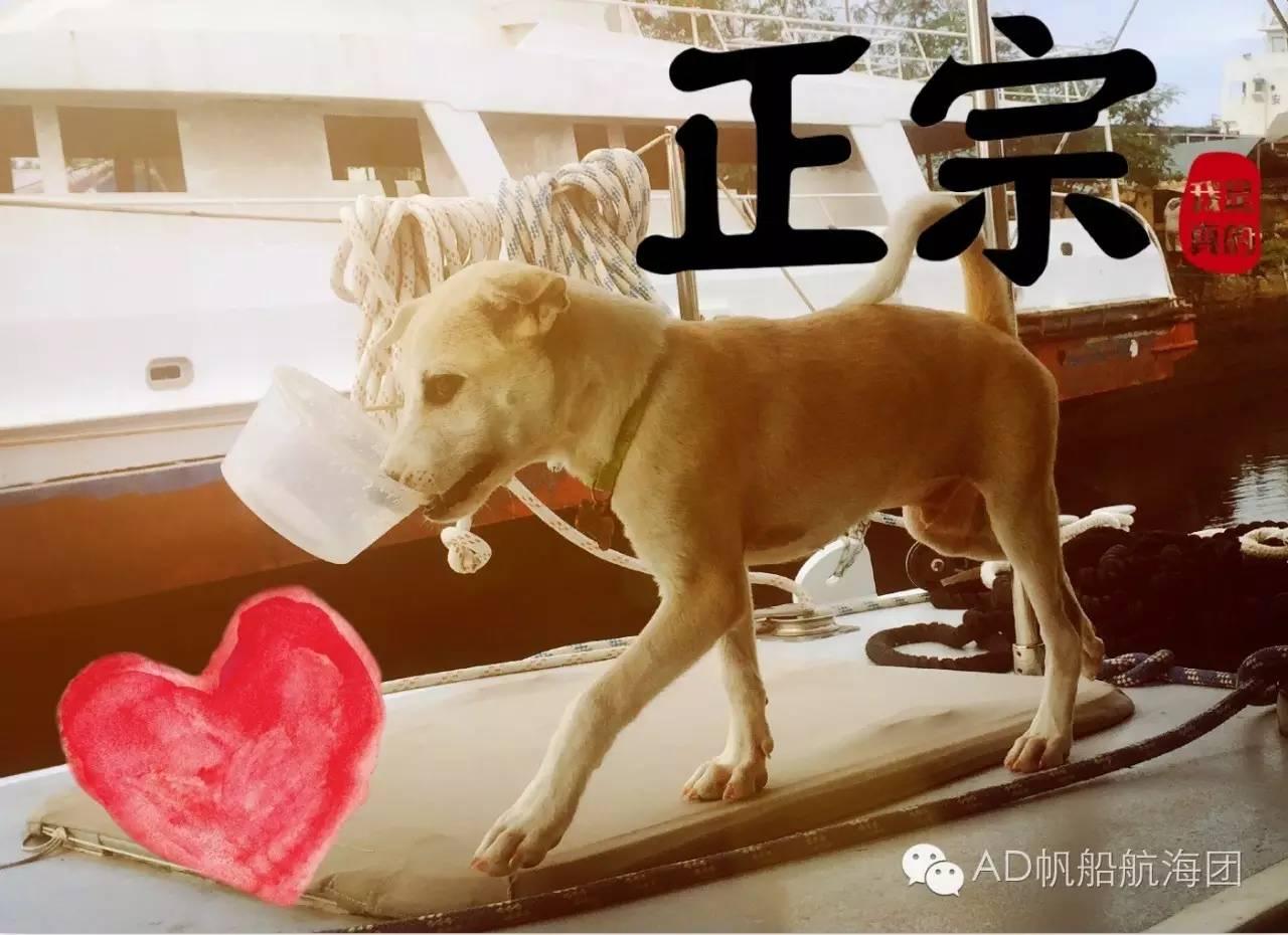 与航海无关—一只水手狗的羁绊 0a4ea0db0e9b91faaf79e4bfb3c70ddf.jpg