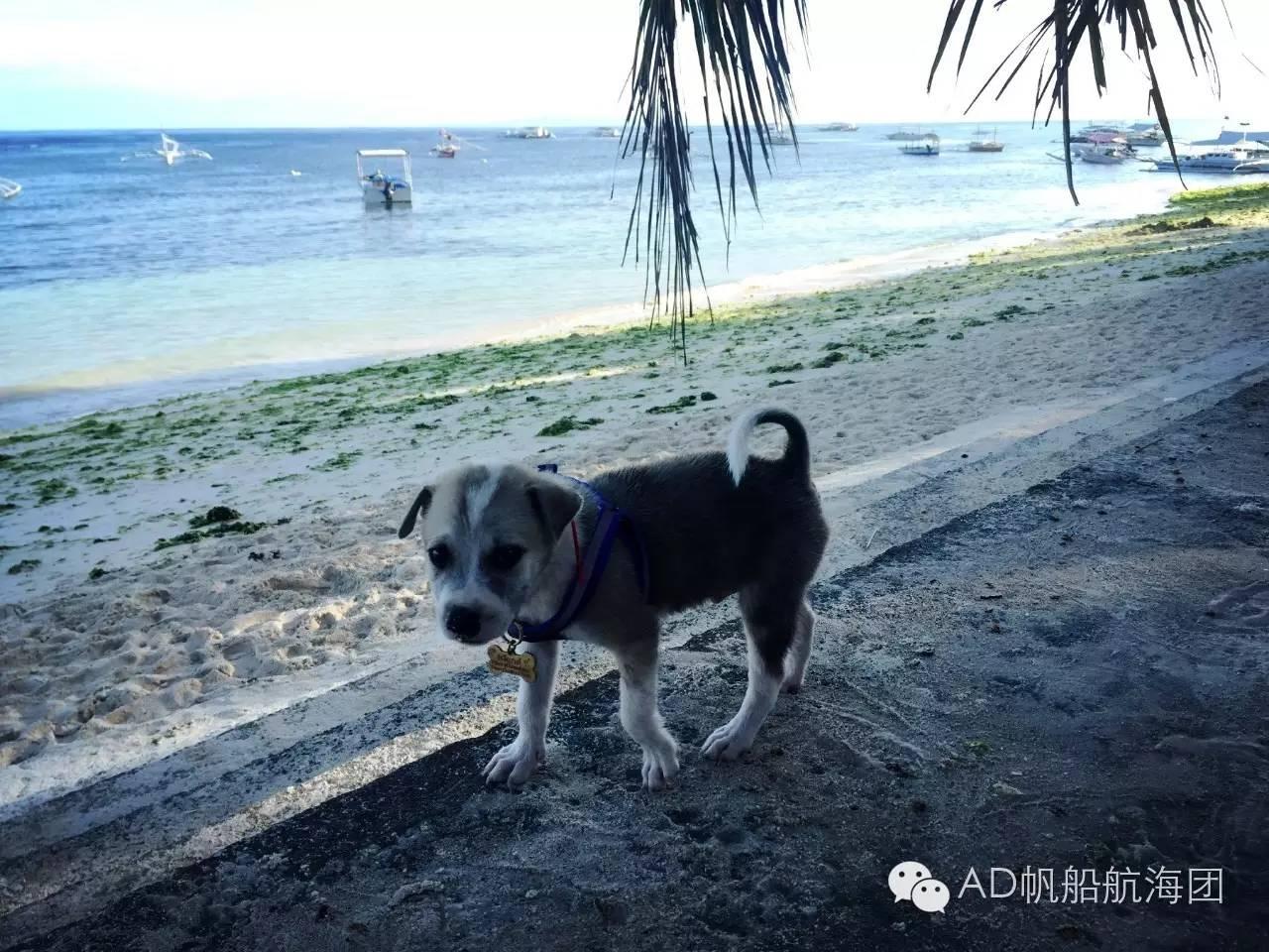 与航海无关—一只水手狗的羁绊 6d67f5ed66e304f870a095261e7673b4.jpg
