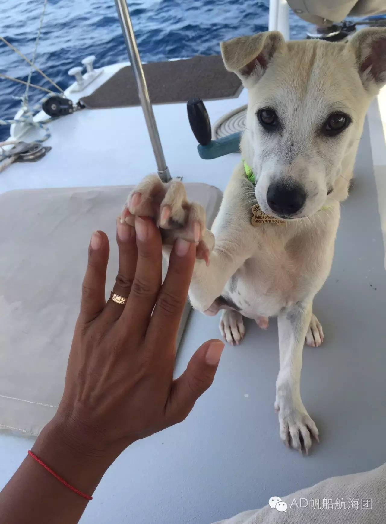与航海无关—一只水手狗的羁绊 89ddd57693dfc033e5bbdfb7ee18e012.jpg