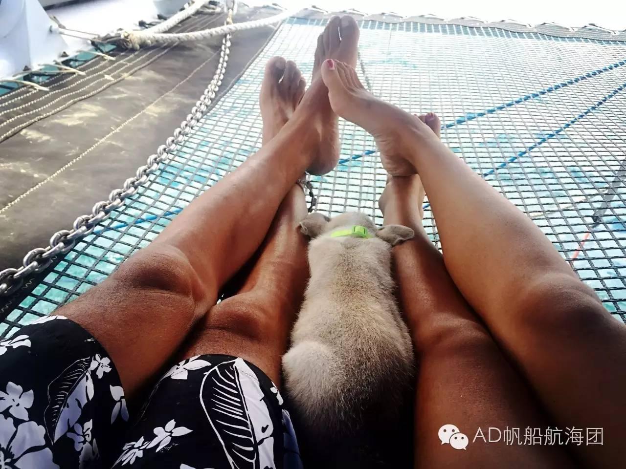 与航海无关—一只水手狗的羁绊 9ee2e612537a42ff42e9c214ae37b74e.jpg