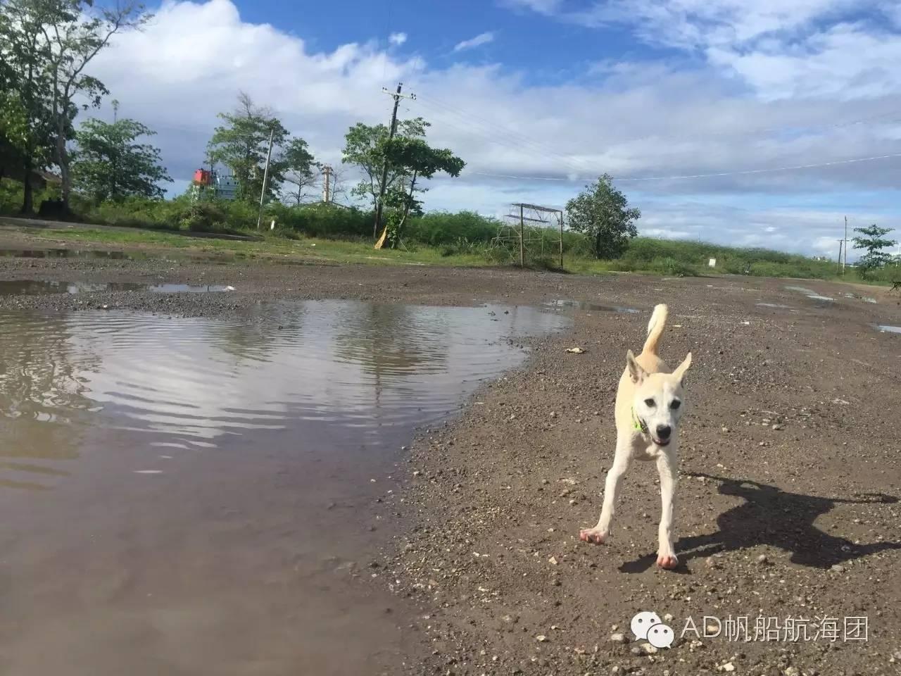 与航海无关—一只水手狗的羁绊 22f82ef707e7c468be98f642b458e249.jpg