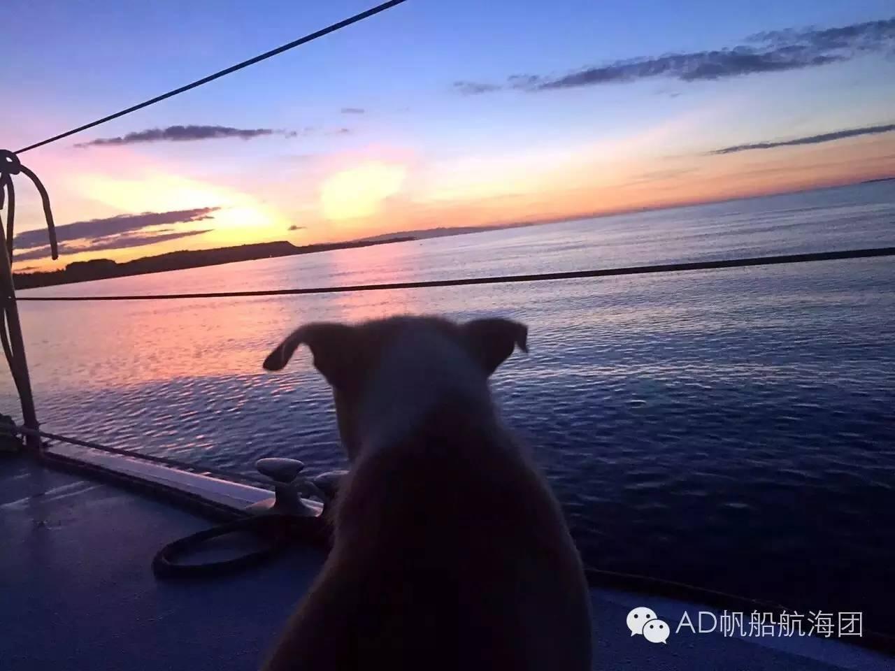 与航海无关—一只水手狗的羁绊 633ffa5bfe79264cb48f5fe0ac6c6bce.jpg