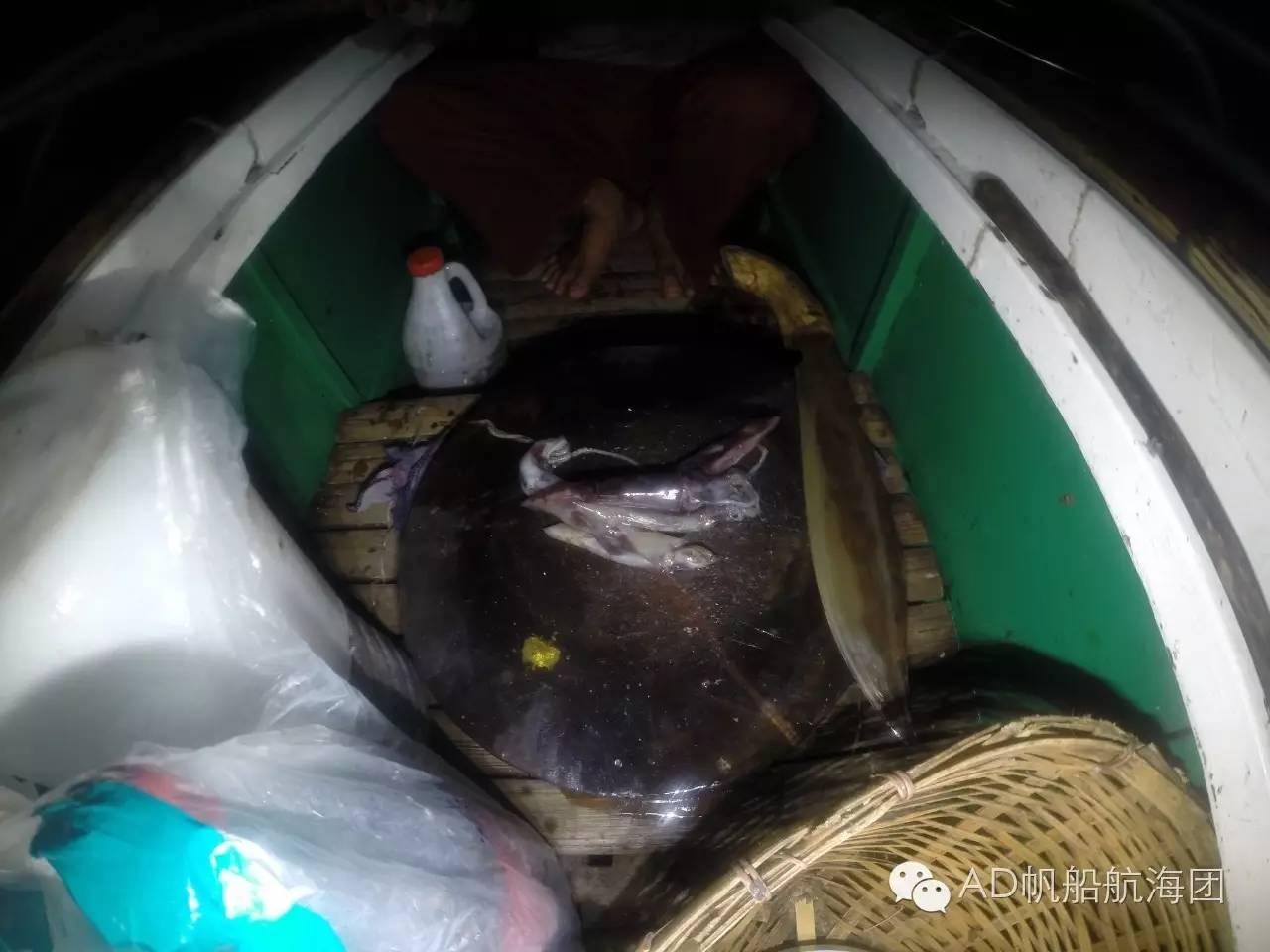 帆船游记二十三:甘米银岛夜捕金枪鱼 73b3c9512a0d6aadbda4d4ba7377c6b3.jpg
