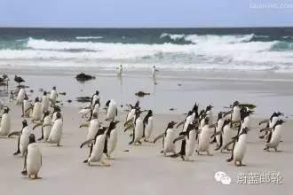2016年11月3日启程,26天巡游南极三岛,遇见王企鹅 54596a2d9e6dcaedea50f1d9a18a617e.jpg