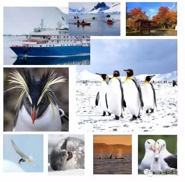 2016年11月3日启程,26天巡游南极三岛,遇见王企鹅 300b809c5e56210e42844a55286a94cf.jpg