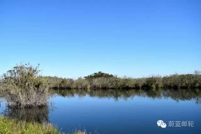 迈阿密邮轮旅游的周边地区的景点二:大沼泽地公园 bece74d8f10aada7fa83844bb76711dd.jpg