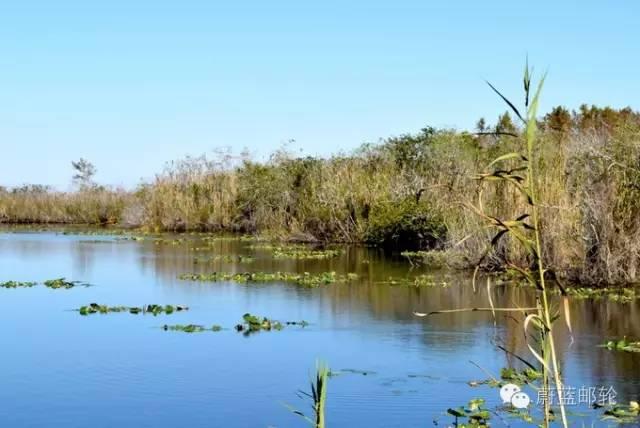 迈阿密邮轮旅游的周边地区的景点二:大沼泽地公园 8606bfce10d1da4164dd08f3bab5f872.jpg