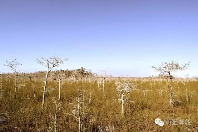 迈阿密邮轮旅游的周边地区的景点二:大沼泽地公园 d26bd57ffcde8086ccc26e2337f1c95b.jpg