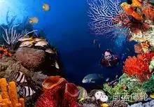 巴哈马航线4天3晚海洋幻丽号 11月4日迈阿密出发 922938781a97e232b9740b55619dac08.jpg