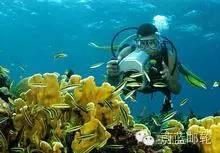 西加勒比海航线8天7晚畅意号 11月13日迈阿密出发 ebbc4a806b34b44f2d6dbade019a4e49.jpg