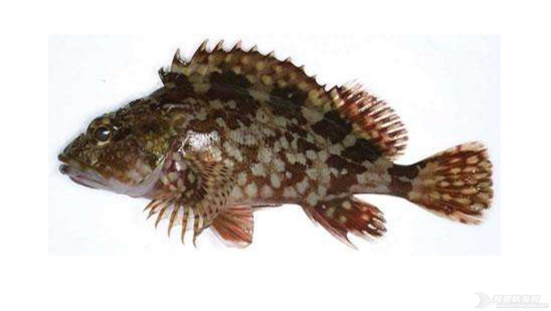 钓鱼爱好者必看,线纹鳗鲶,石头鱼,浔仔鱼,河豚 常见几种有毒的海鱼(钓鱼爱好者必看) 屏幕快照