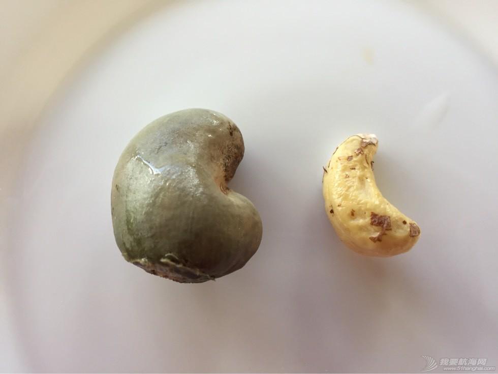 《海角孤舟》(4)奇异的腰果和巴西莓 092118ylde98pllikep9ek.jpg