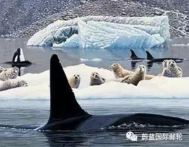 阿拉斯加 尚宁号6月19日阿拉斯加冰河湾冰川之旅 b2fb20223b050c600cc283bb96ee9346.jpg